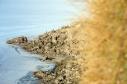 Isla del Pescado en el Parque Nacional Uyuni, Bolivia.