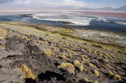 Laguna colorado en Parque Nacional Uyuni, Bolivia.