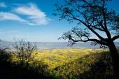 Florecimiento de los Guayacanes Ecuador