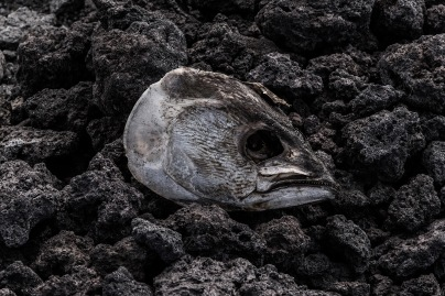 Las especies marinas afectadas por la contaminación o pesca ilegal deliberada son innumerables.