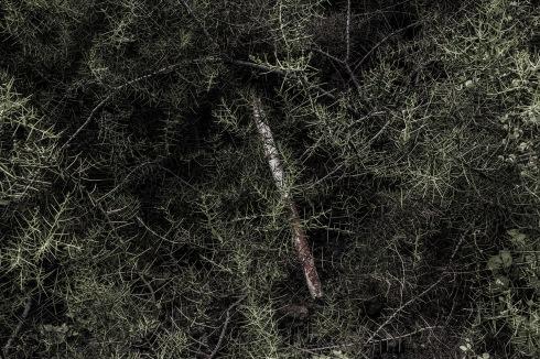 La naturaleza pretende a cada paso reivindicar su espacio, crecer nuevamente y borrar la huella de esta colonización irresponsable.