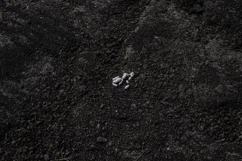 No existe una conciencia respecto a los desechos orgánicos producidos por los animales introducidos a las islas.